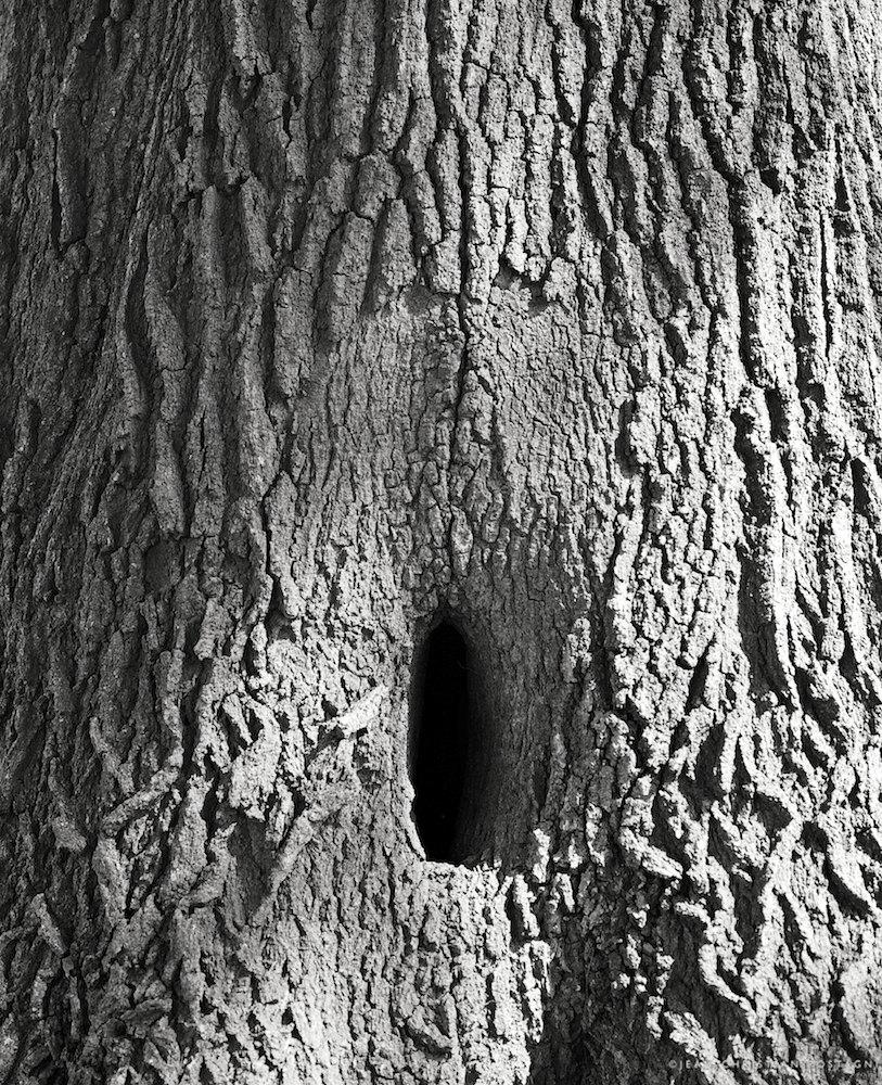 Vaginal Trunk