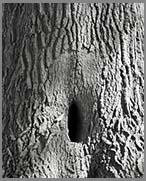 trunk vagina