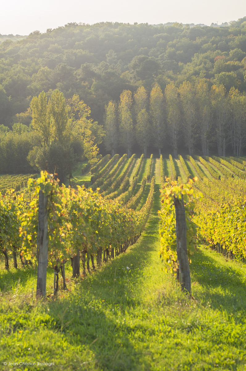 chateau chatard, vignes, bordeaux