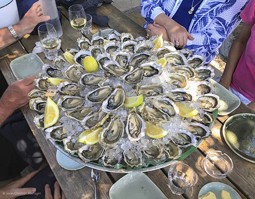 cap ferret, oysters