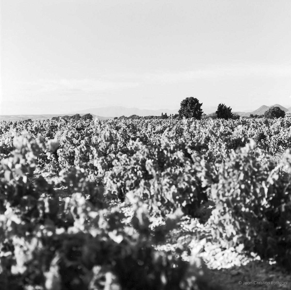 Rhône Valley