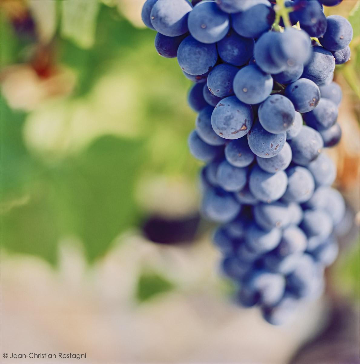 raisins, grape