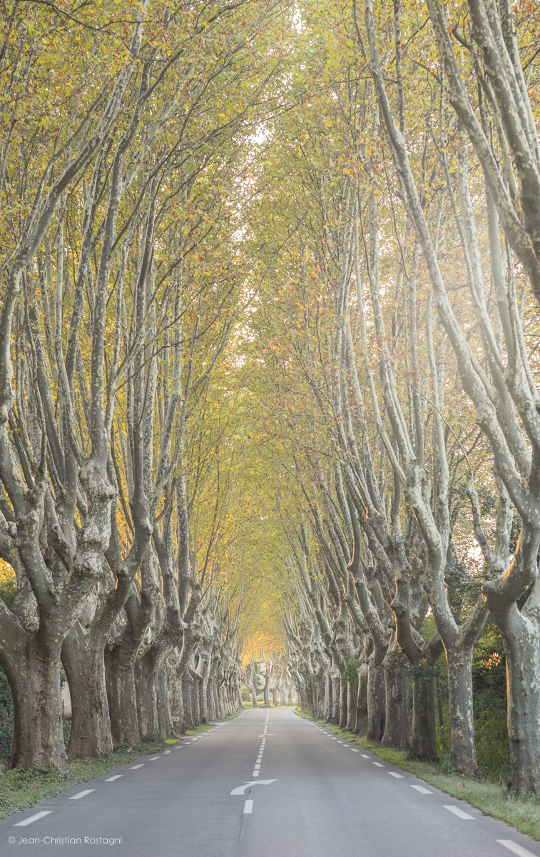 route, provence, platanes