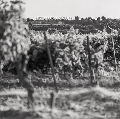 Vacqueyras, vins