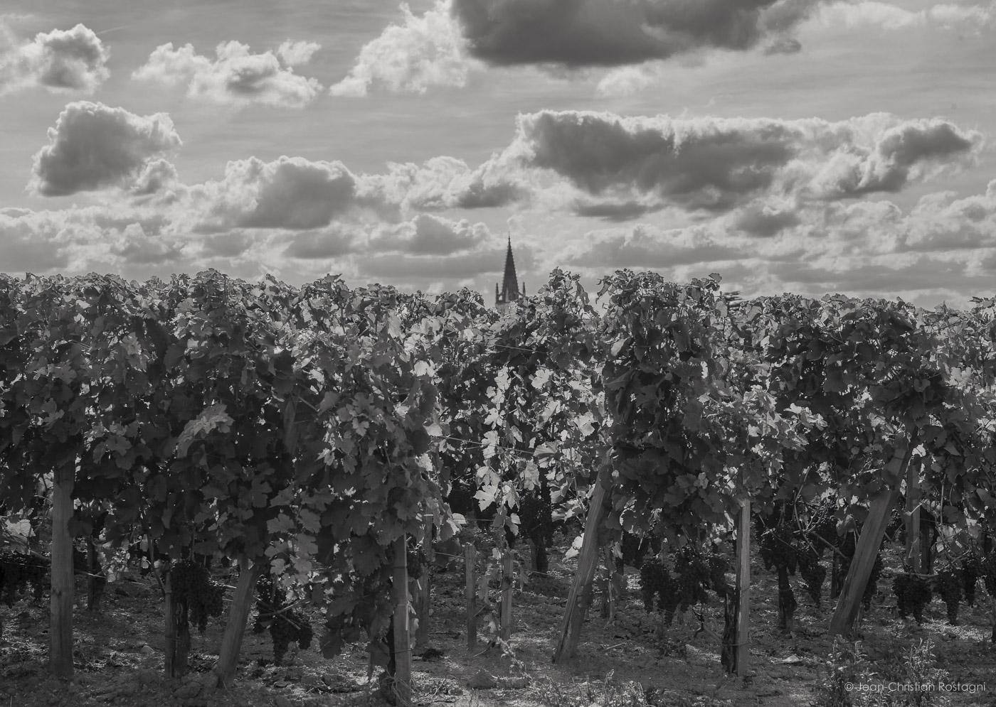 Saint Emilion, vineyard