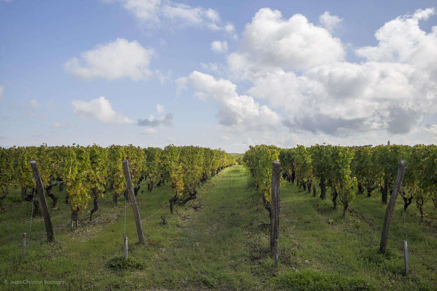 Chateau d'Yquem, vignes